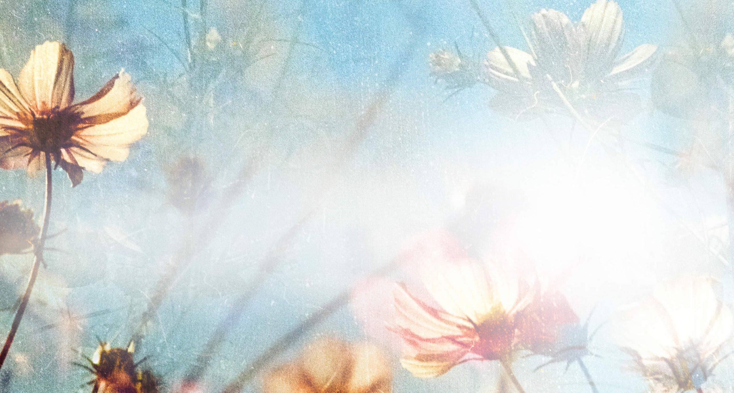 spray-aromas-organic-flower-essence-natures-wish